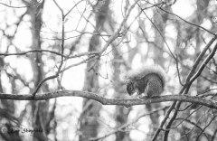 MarchSquirrel